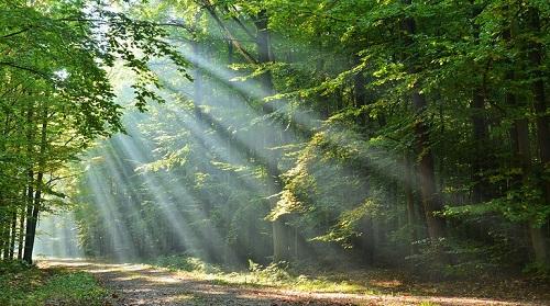 מפגש ביער הקסום